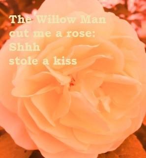 willowrose3