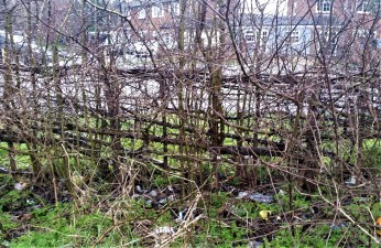 hedge at Ruxley Lane