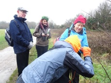 Looking at brown hairstreak butterfly eggs on blackthorn- tiny!