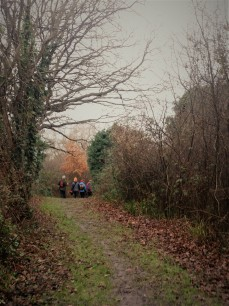 Riverhill Copse